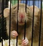 689,003 People turned into lab rats on Facebook without consent